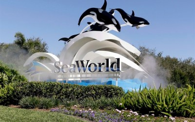 Air Canada, WestJet Latest Companies to Cut Ties to SeaWorld Ahead of Whale Bill