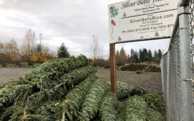 Nature Conservancy Recommends a Better Fate for Your Christmas Tree