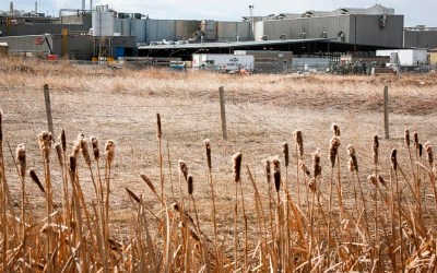 Cargill Beef Plant to Reopen Next Week After COVID-19 Outbreak Forced Closure