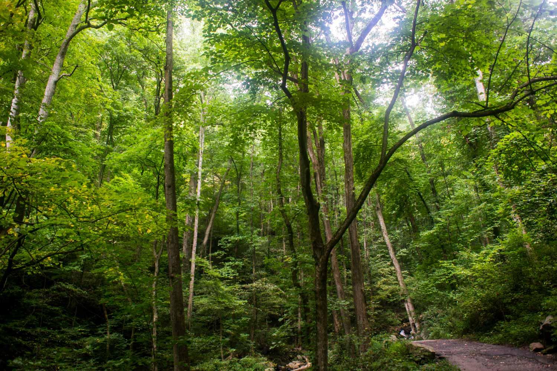 Amicalola Falls Georgia Waterfalls