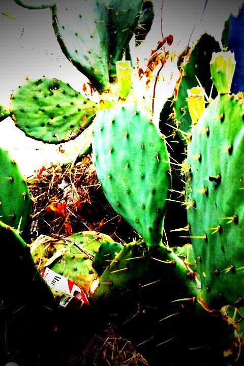 Cactus Nashville