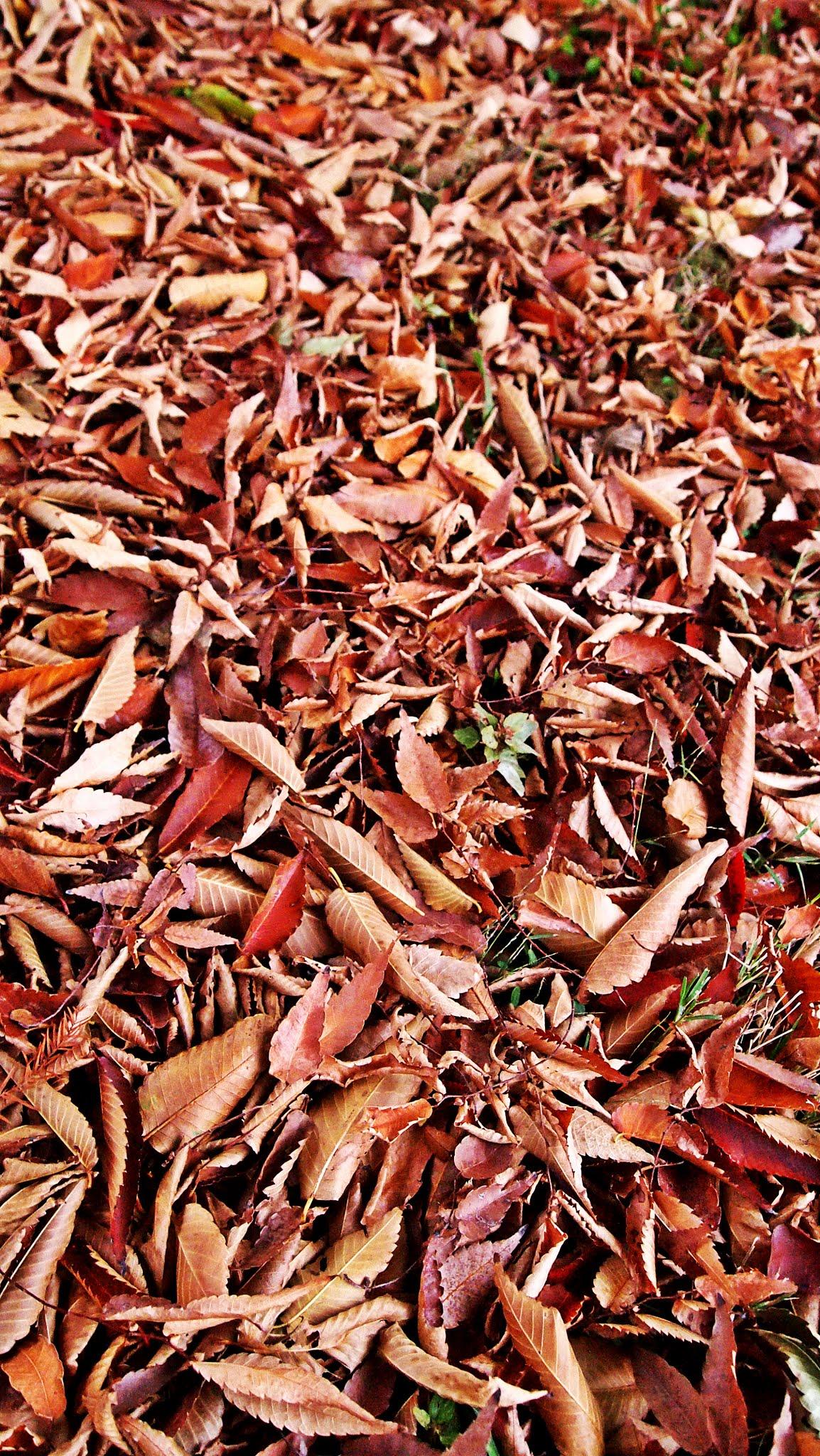 Germantown in Autumn