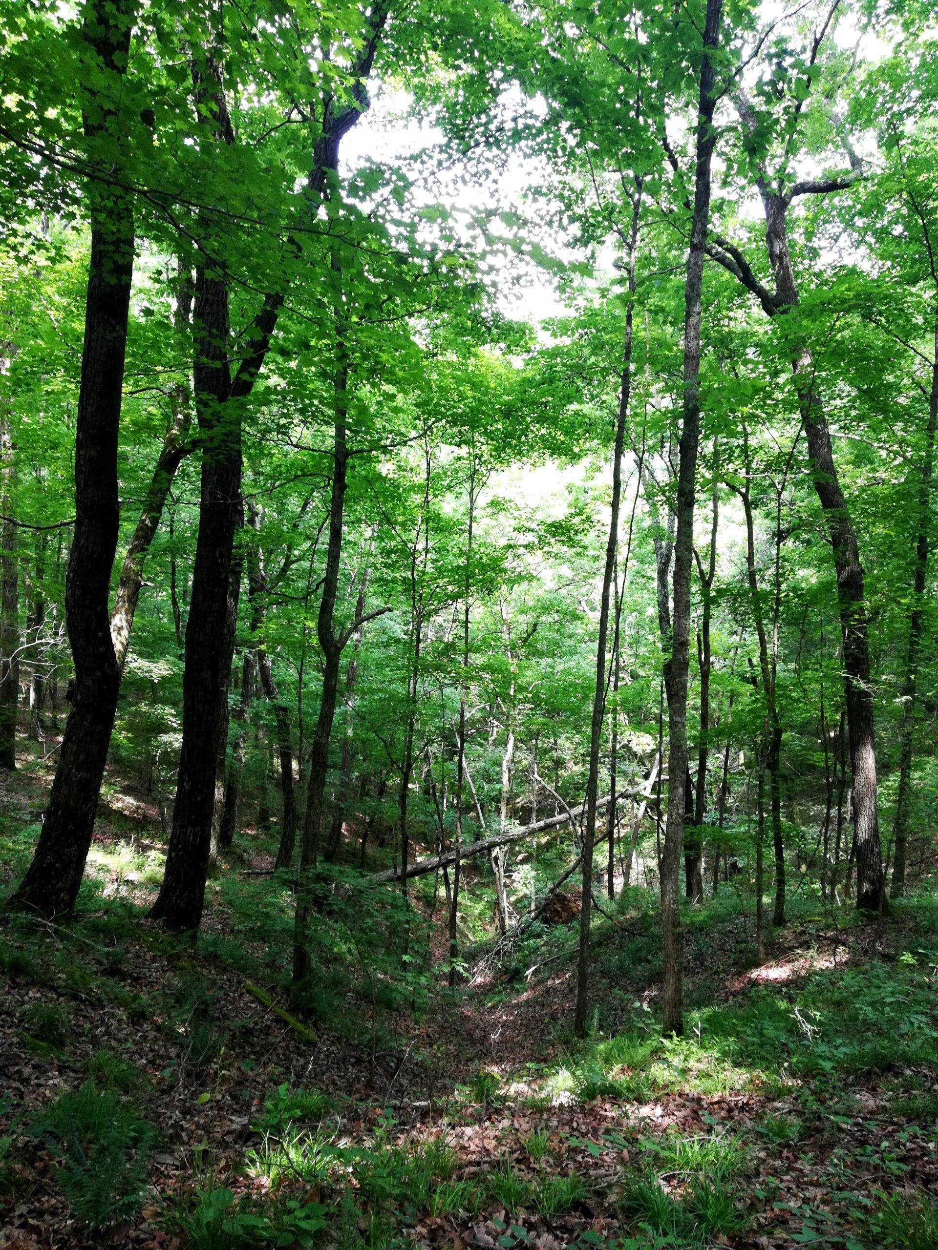 Laurel Woods Trail Beaman Park Photos