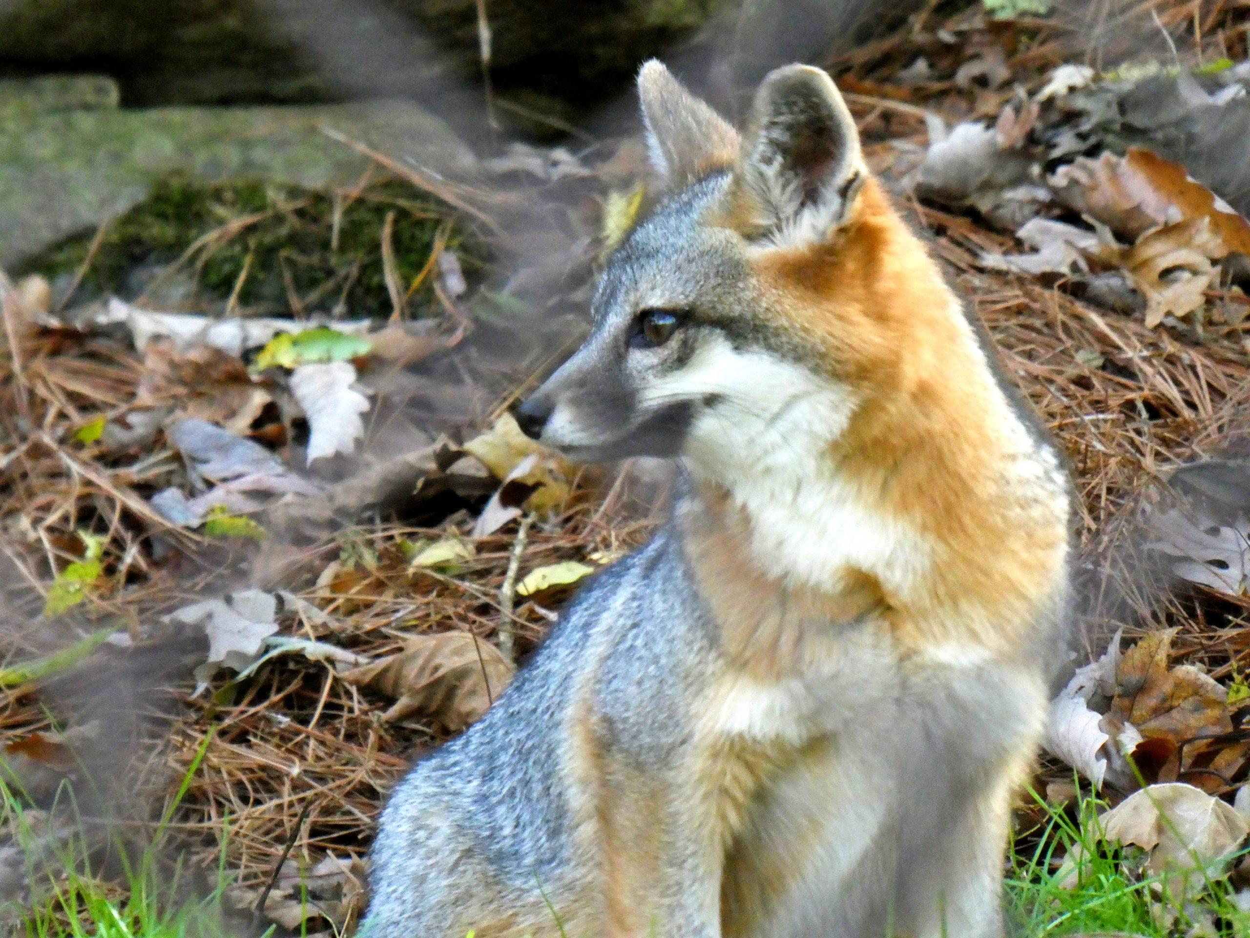 WNC Nature Center Asheville Photos