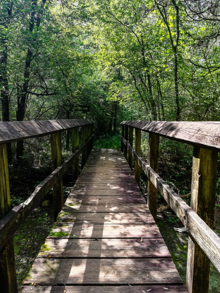 Bryant Grove Trail Hiking Long Hunter State Park