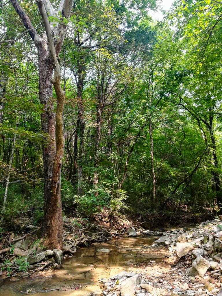 Monte Sano Nature Preserve Fagan Creek