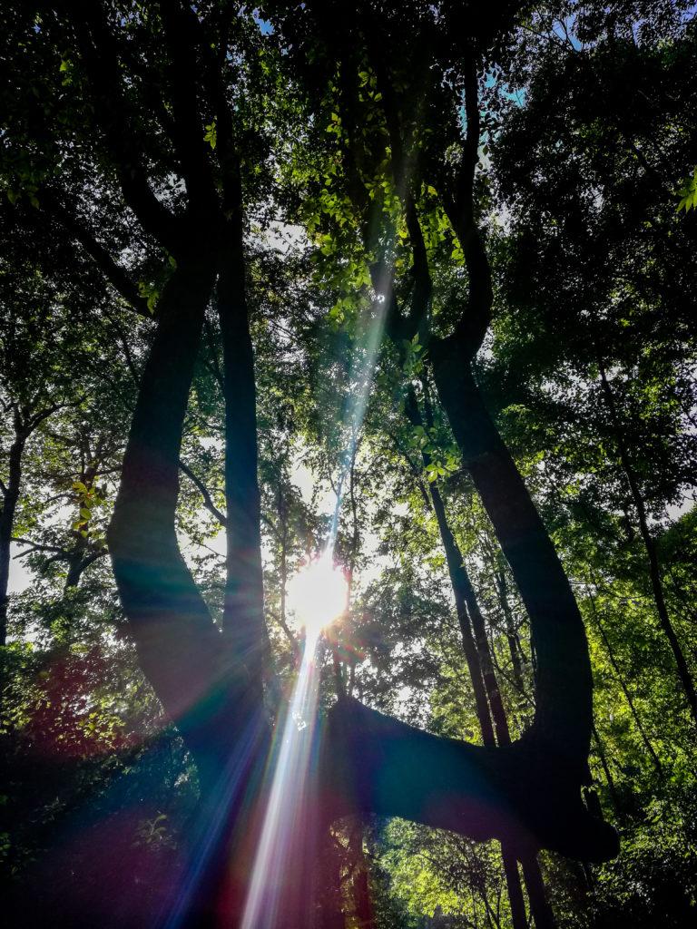 Warner Parks Hiking via  Burch Reserve Trailhead