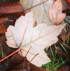 11.28.14 Leaf