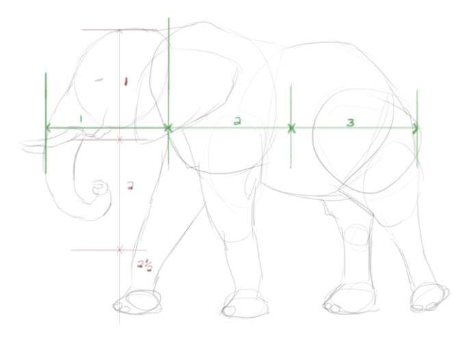 An elephant drawing measured in heads.
