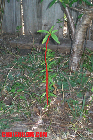 An example of a plant with a line of action drawn