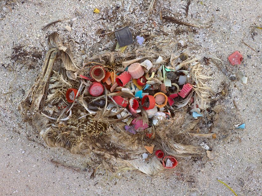 Photographer Chris Jordan's series <em>Midway: Message from the Gyre</em> documents the albatross population of Midway Atoll, whose 'nesting chicks are fed lethal quantities of plastic by their parents, who mistake the floating trash for food as they forage over the vast polluted Pacific Ocean.' (http://www.chrisjordan.com)