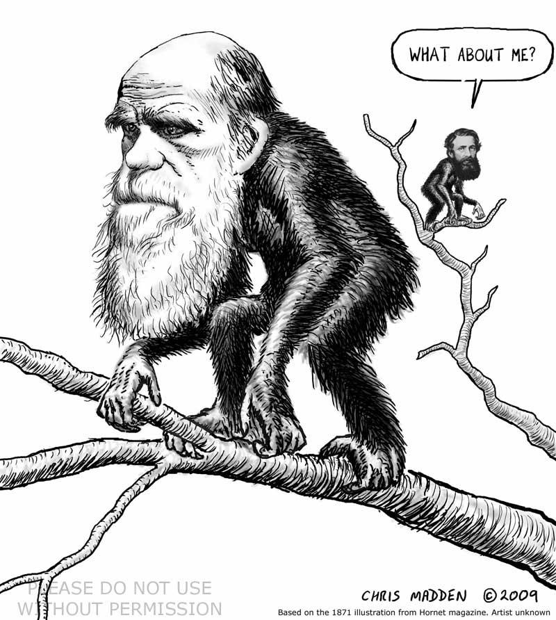 darwin as ape russel wallace caricature