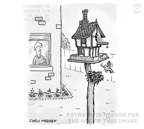 bird nest box design cartoon