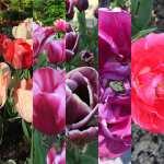 Le Parc floral de Paris - La nature enchantée, un lieu d'exposition lumineux proche Paris - bois de Vincennes