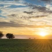 The sun sets over a Southwest Oklahoma Cotton Field