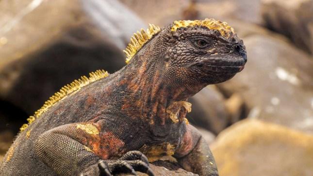Amazing wildlife on the Galapagos Islands,Ecuador