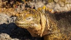 2013.07.17 Galapagos Santa Fe