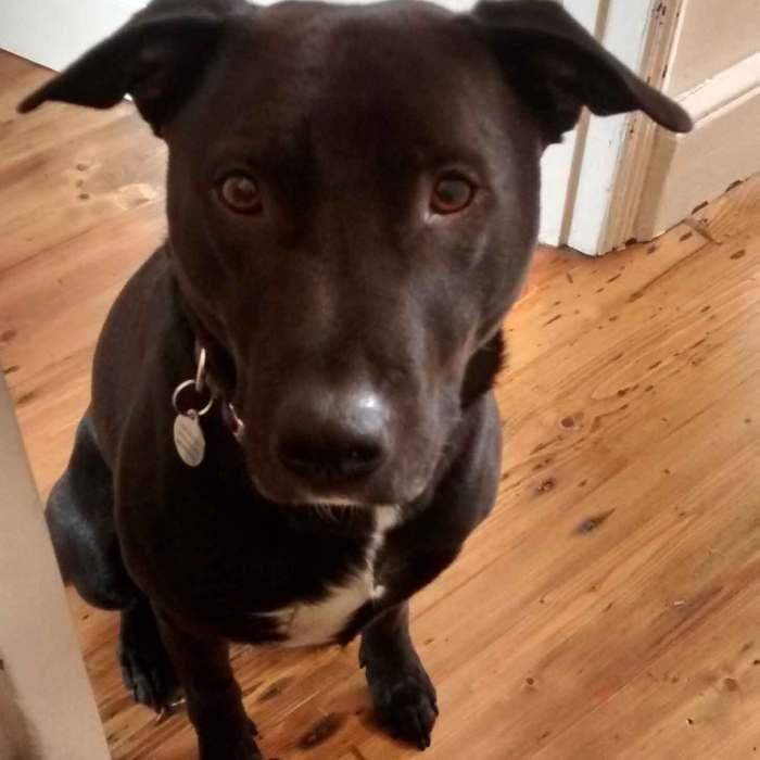 Boost company productivity – get a dog?