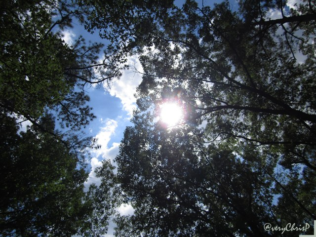 Sunny skies through the trees.