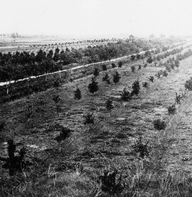 View of San Gabriel orchards [ca. 1870]. Image from the Los Angeles Public Library Photo Collection.