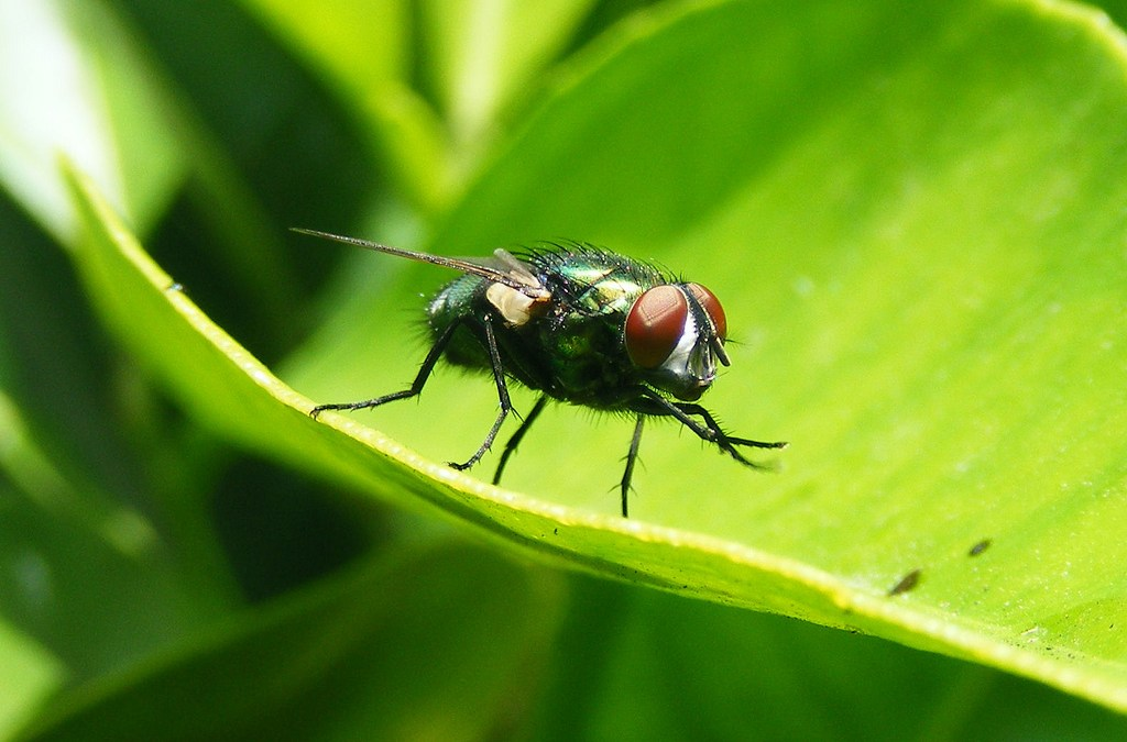 Have You EverLooked a Fly In The Eye?