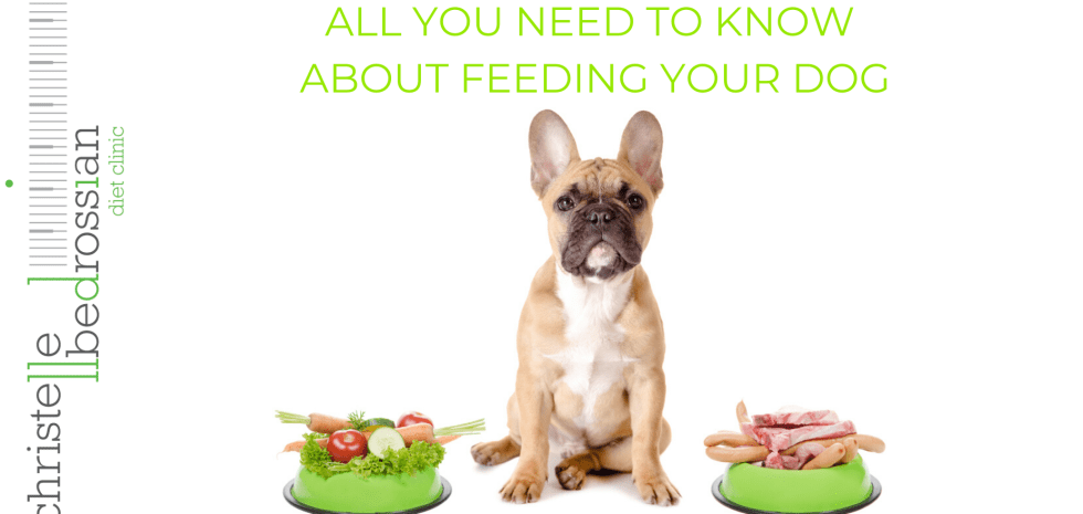 all you need to know about feeding your dog