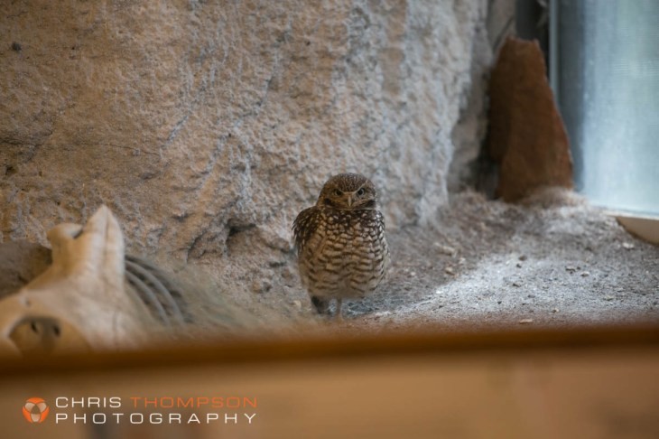 spokane-photographer-chris-thompson-photography-389