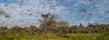 Coronavirus Worsens the East Africa's Worst Plague of Locusts in 70 Years