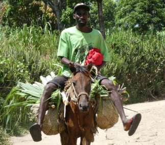 Farmer on his way to market