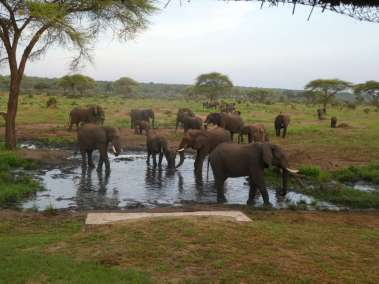 Botswana Elephants at the Watering Hole