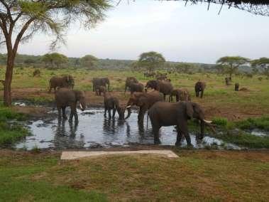 Botswana Elephants at the Watering Hole