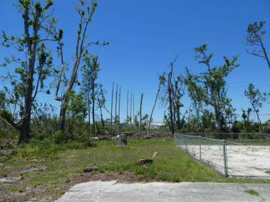 Hurricane Michael Tree Devestation wiping out a thick forest