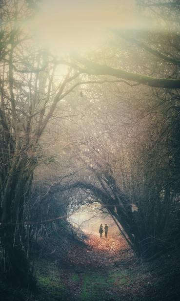 a walk in the woods, the mickle woods