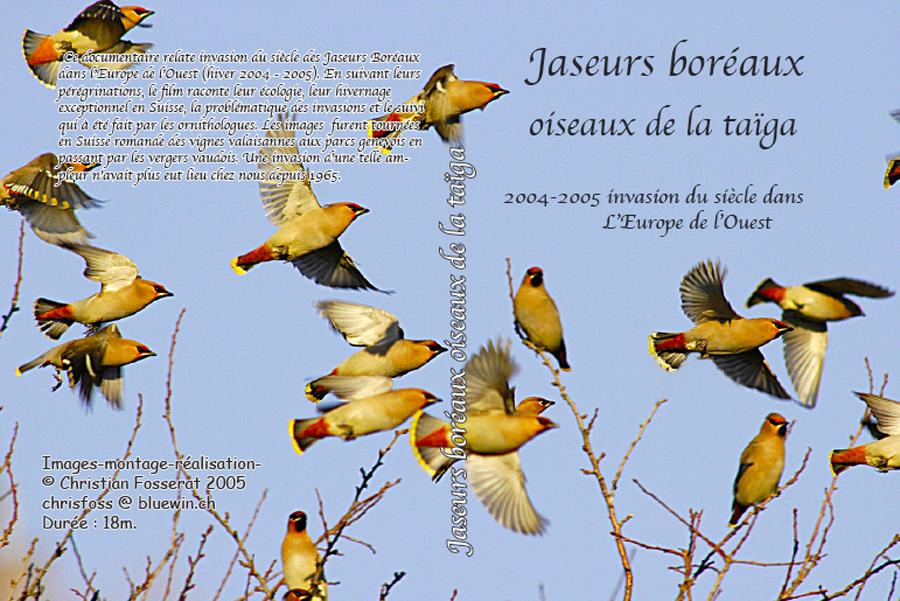 """DVD""""jaseurs boréaux oiseaux de la taïga"""""""