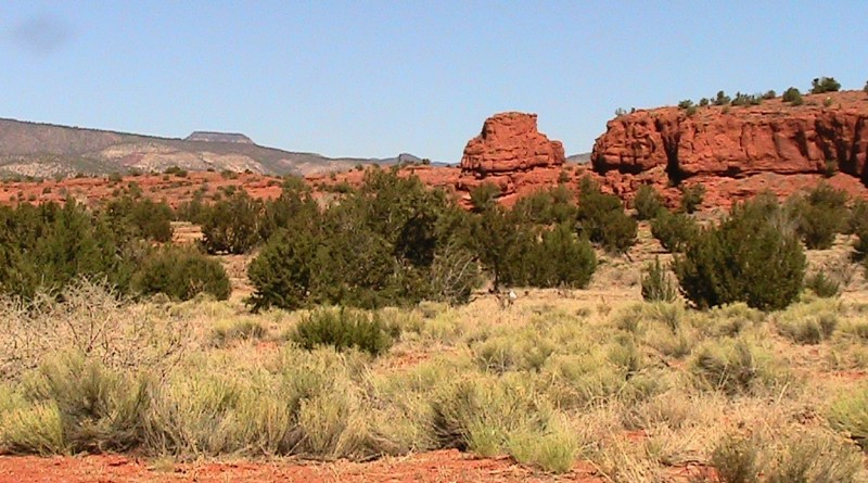 desert brush & red rocks