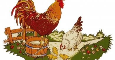 The History of the Chicken and the Egg