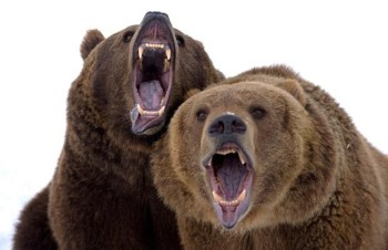 Image result for two bears