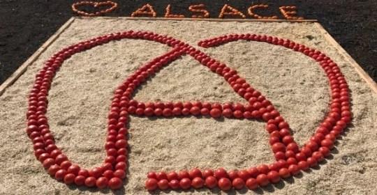 Conférence Santé en Alsace : Saveurs et Soleil d'Automne