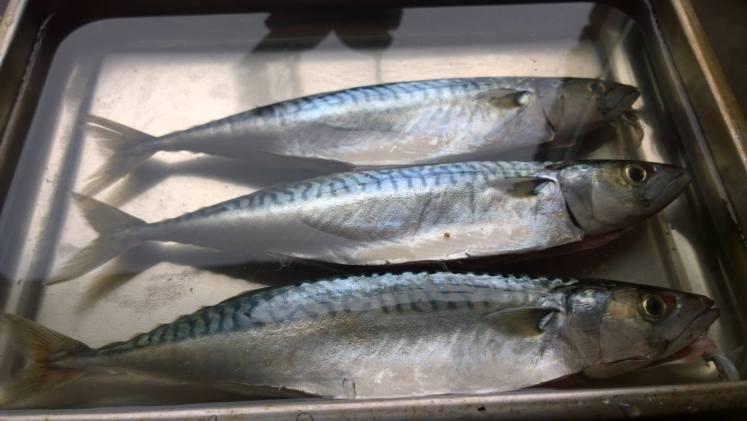 Gerookte makreel - pekelbad