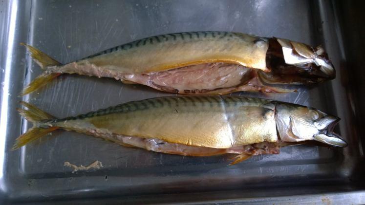 Gerookte makreel - uit smoker