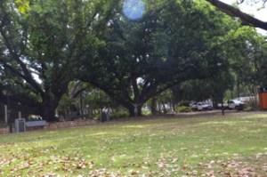 Christie Adams under a large tree in Darwin