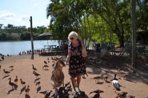 Christie Adams feeding a Kangaroo amongst birds