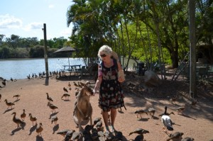 Christie Adams feeding a Kangaroo amongst birds