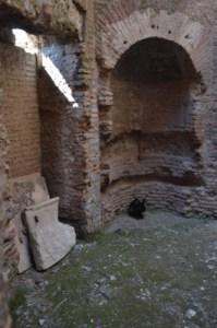 Roman rabbit