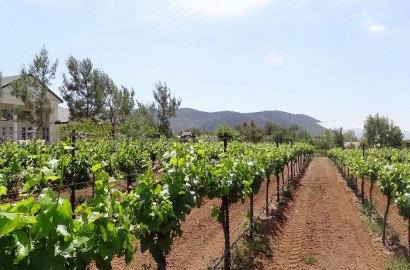 Cream of the Crop: Vineyards and Wine Country Estates Around the World