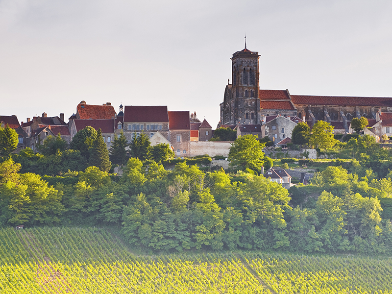 france-burgundy-vezelay-vineyards