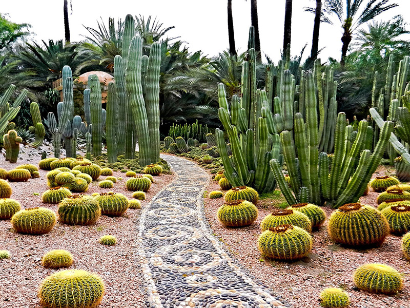 Cacti garden at Moroccan palace