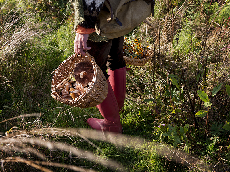 Foraging-mushrooms-grass-boots-basket-GettyImages