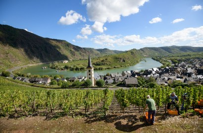 Riesling's Rise: What to Know About This Great White Wine