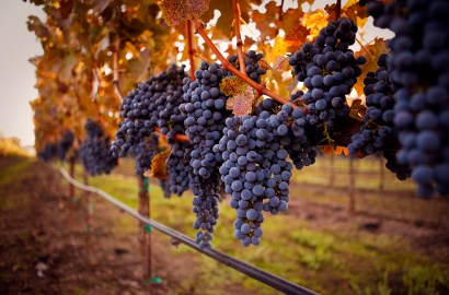 The King of Grapes: 5 Facts to Know About the Best Cabernet Sauvignons